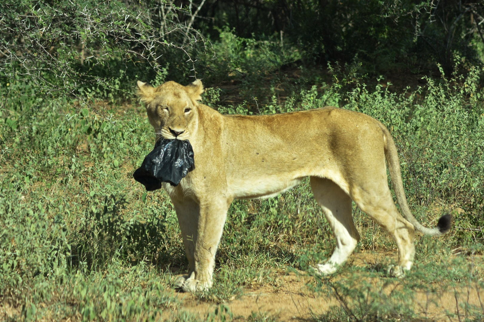 Plastic at Kruger Park