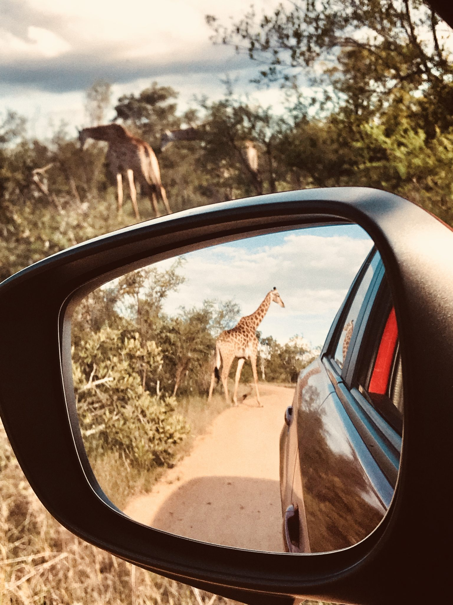 A first Timers Guide to The Kruger