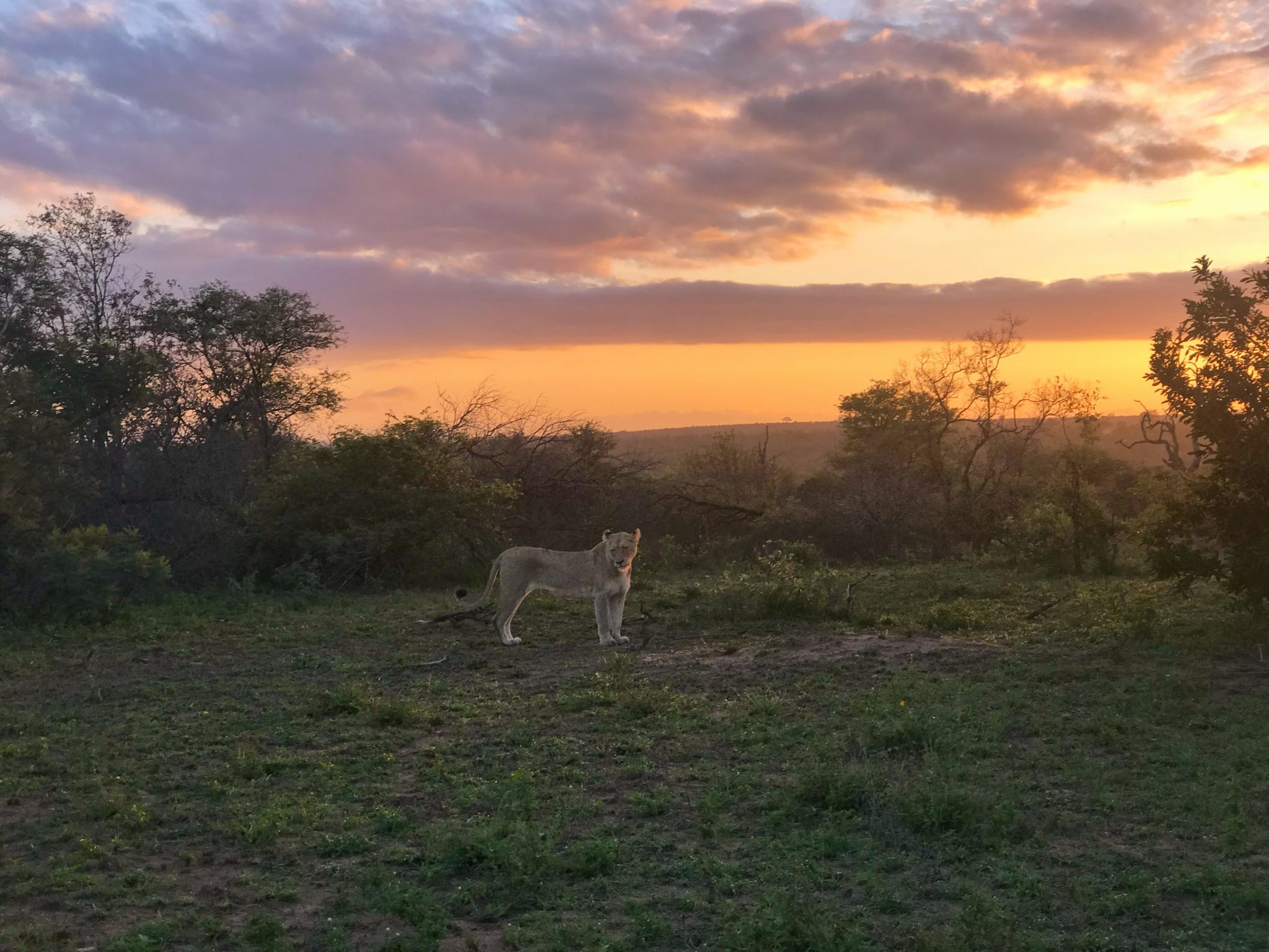 A First Timers Guide to The Kruger 28