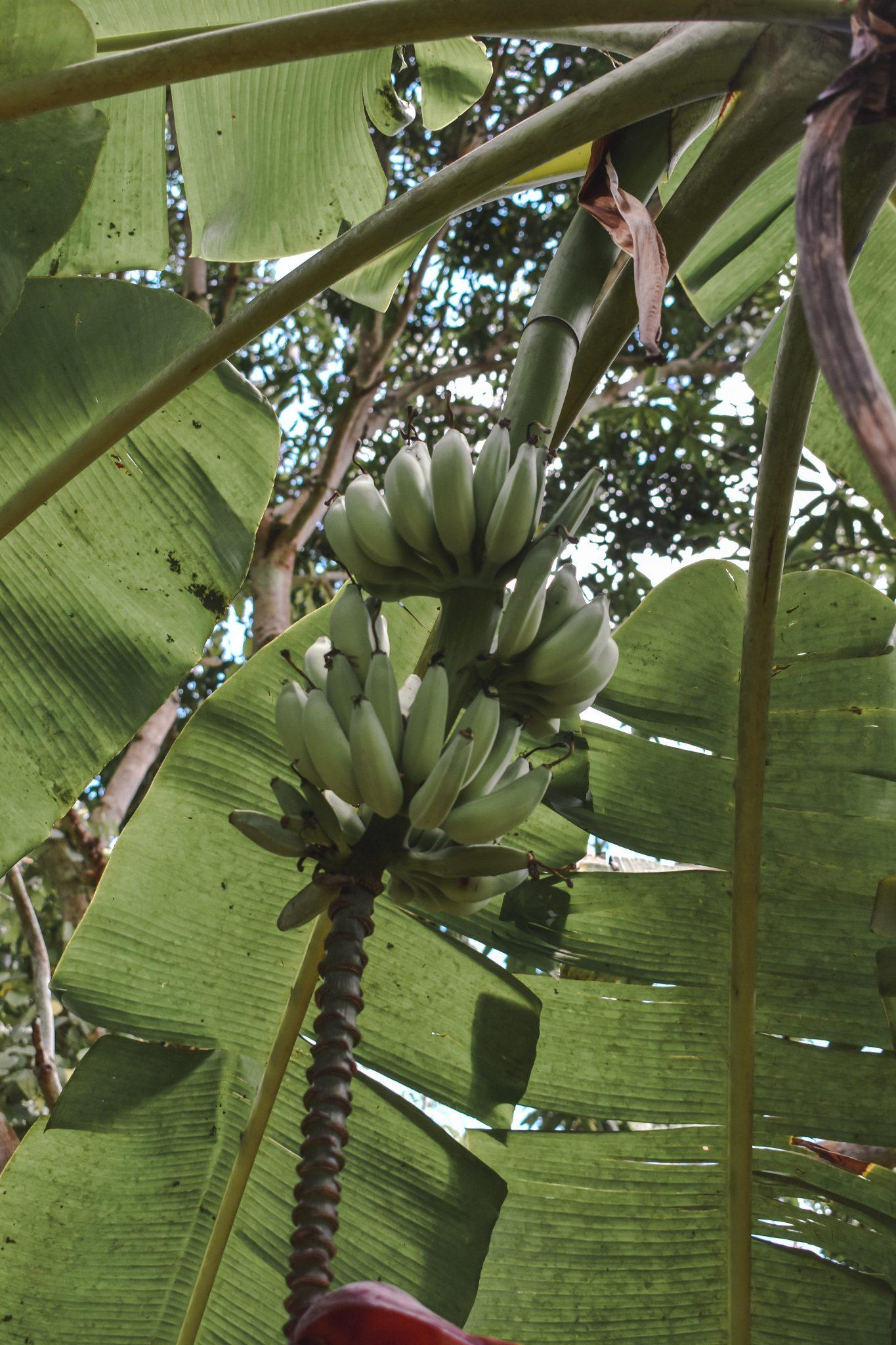 Visiting a Zanzibar Spice Farm 36
