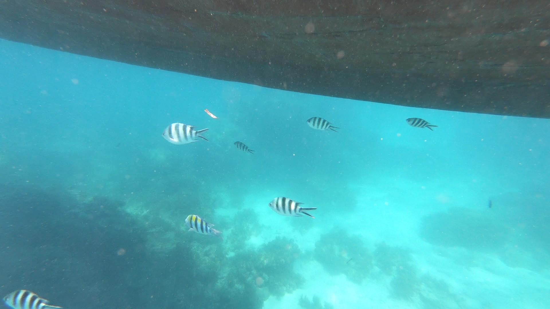 {Travel} Zanzibar - Part 2: Mnemba Atoll & Safari Blue 17