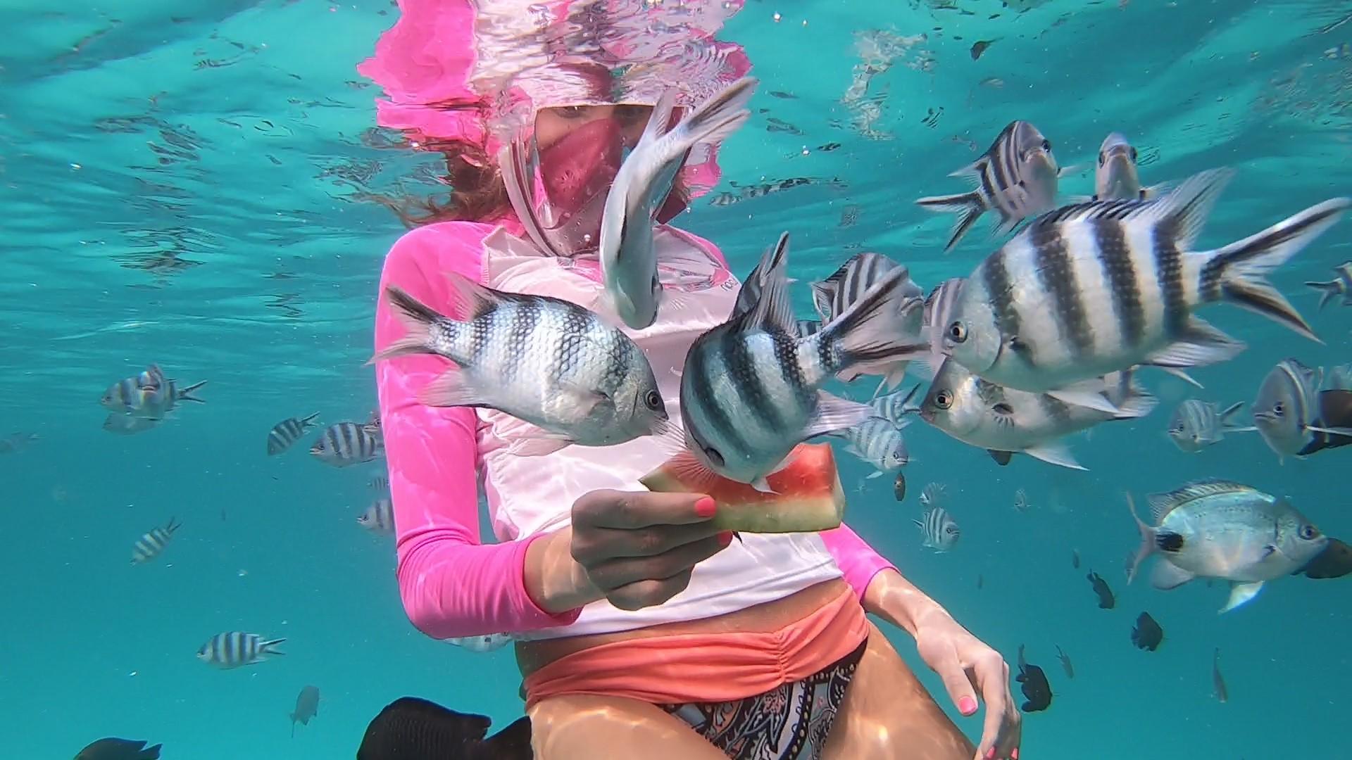 {Travel} Zanzibar - Part 2: Mnemba Atoll & Safari Blue 5