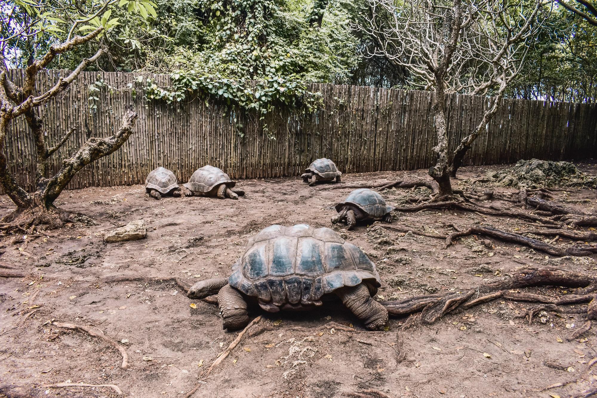 Tortoise2 1