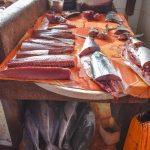 fish 1 1 lr