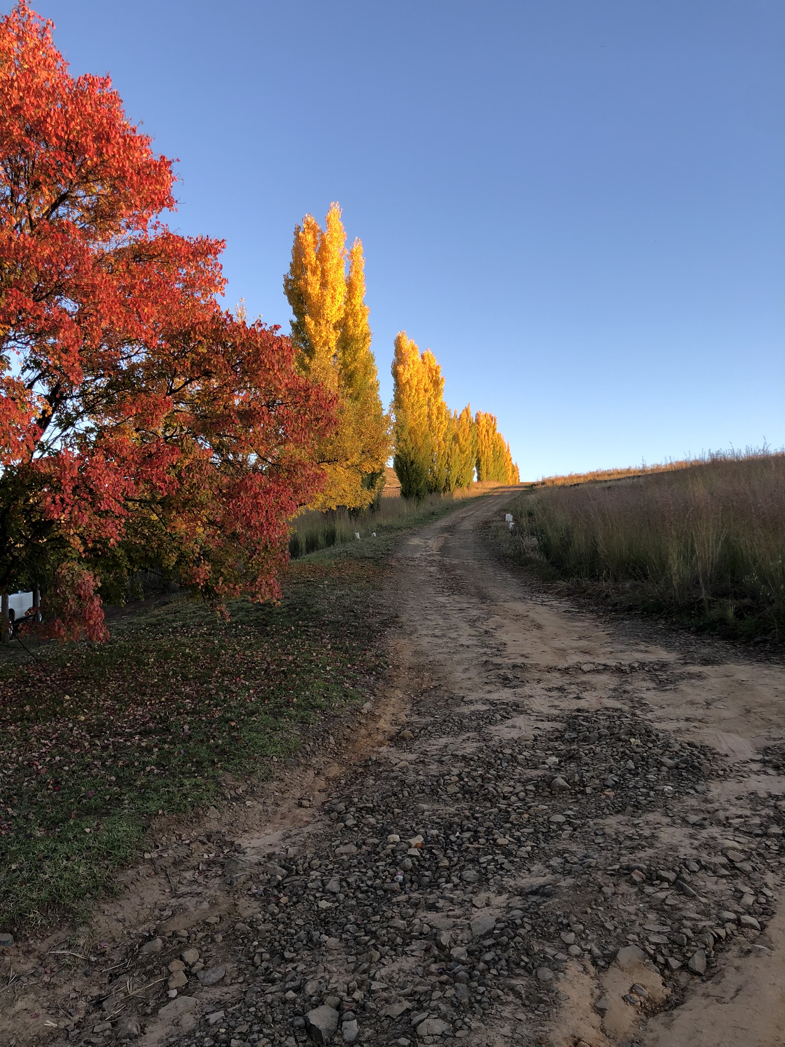What to do in Clarens Free State 60